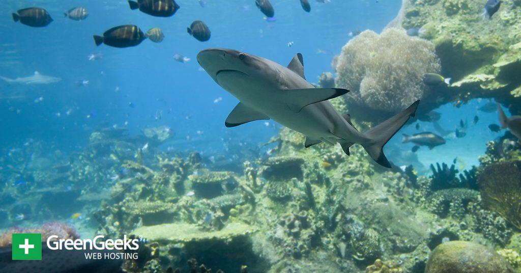 Great Barrier Reef Shark